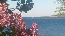 Lilacs and Lighthouses